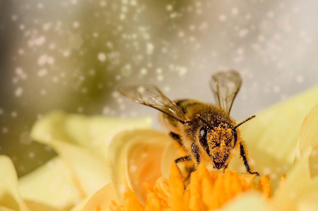 declin-alarmant-insectes